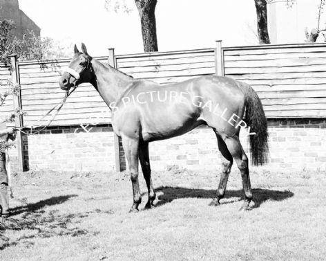 Racehorse Red Rum with Jockey Brian Fletcher